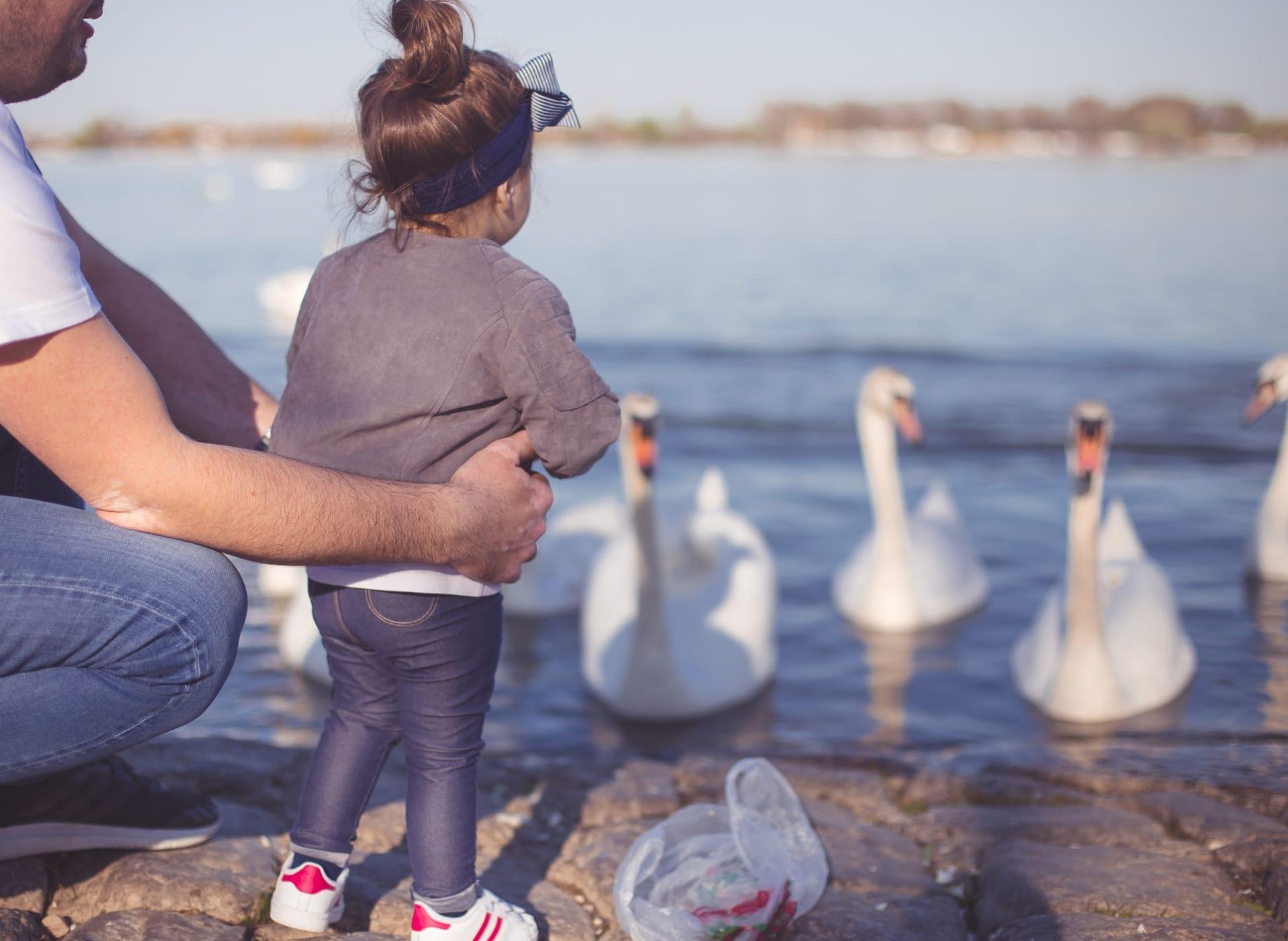 Opplev fuglelivet på Østensjøvannet