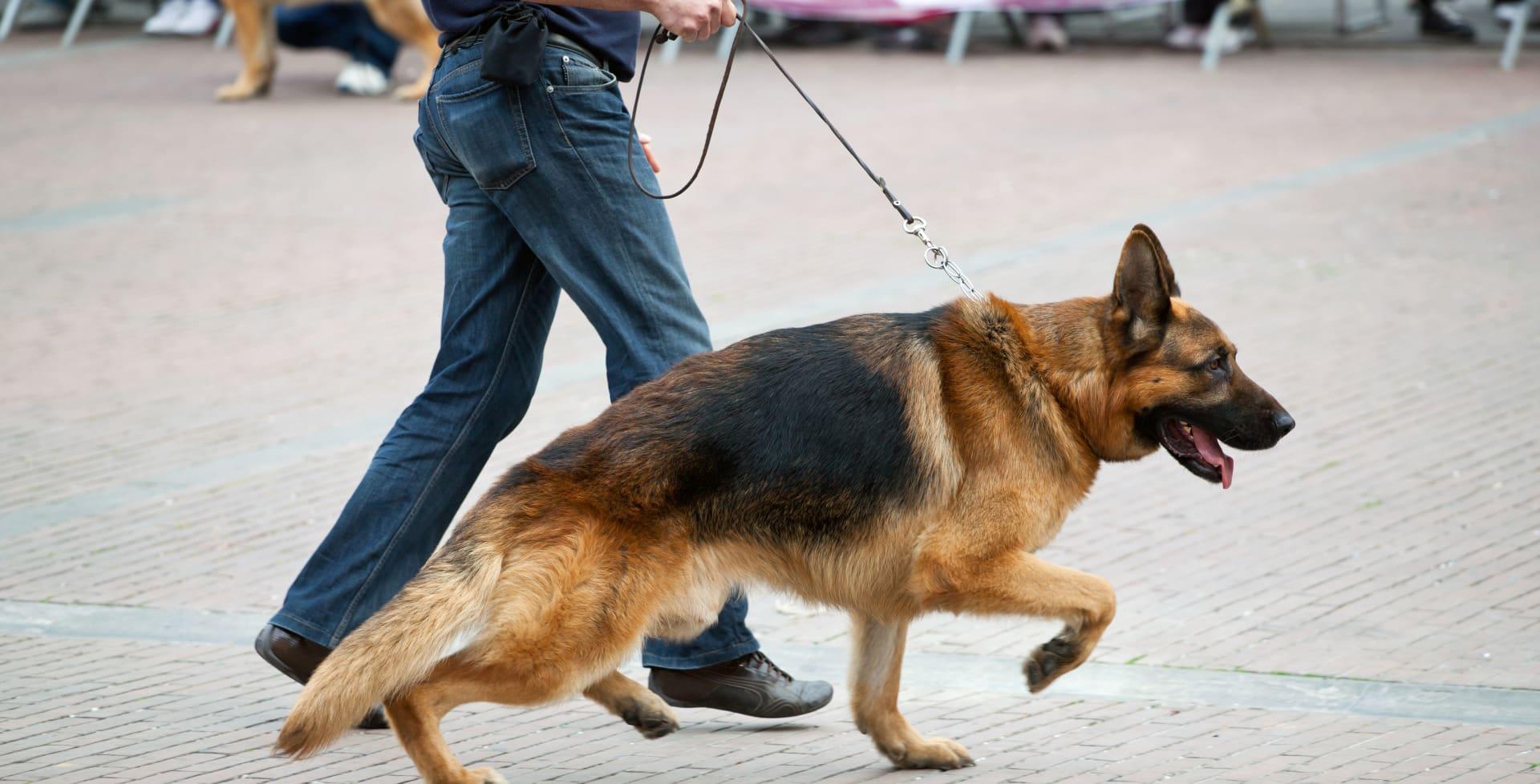 Hunder, barn og syklister kan påføre skade. Mange har ansvarsforsikring som dekker slike skader.