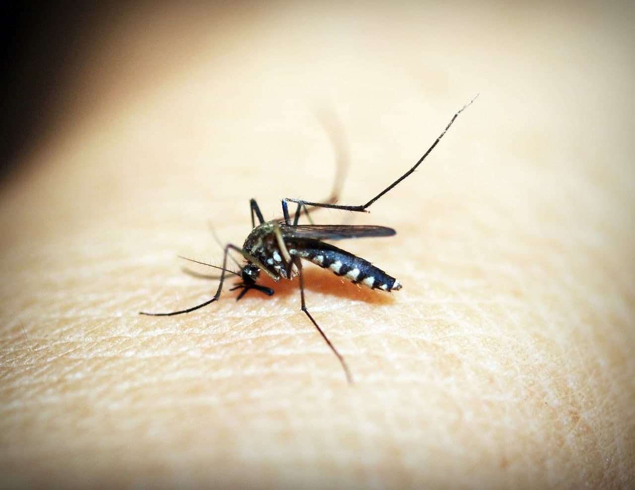 Myggstikk var ikke yrkesskade