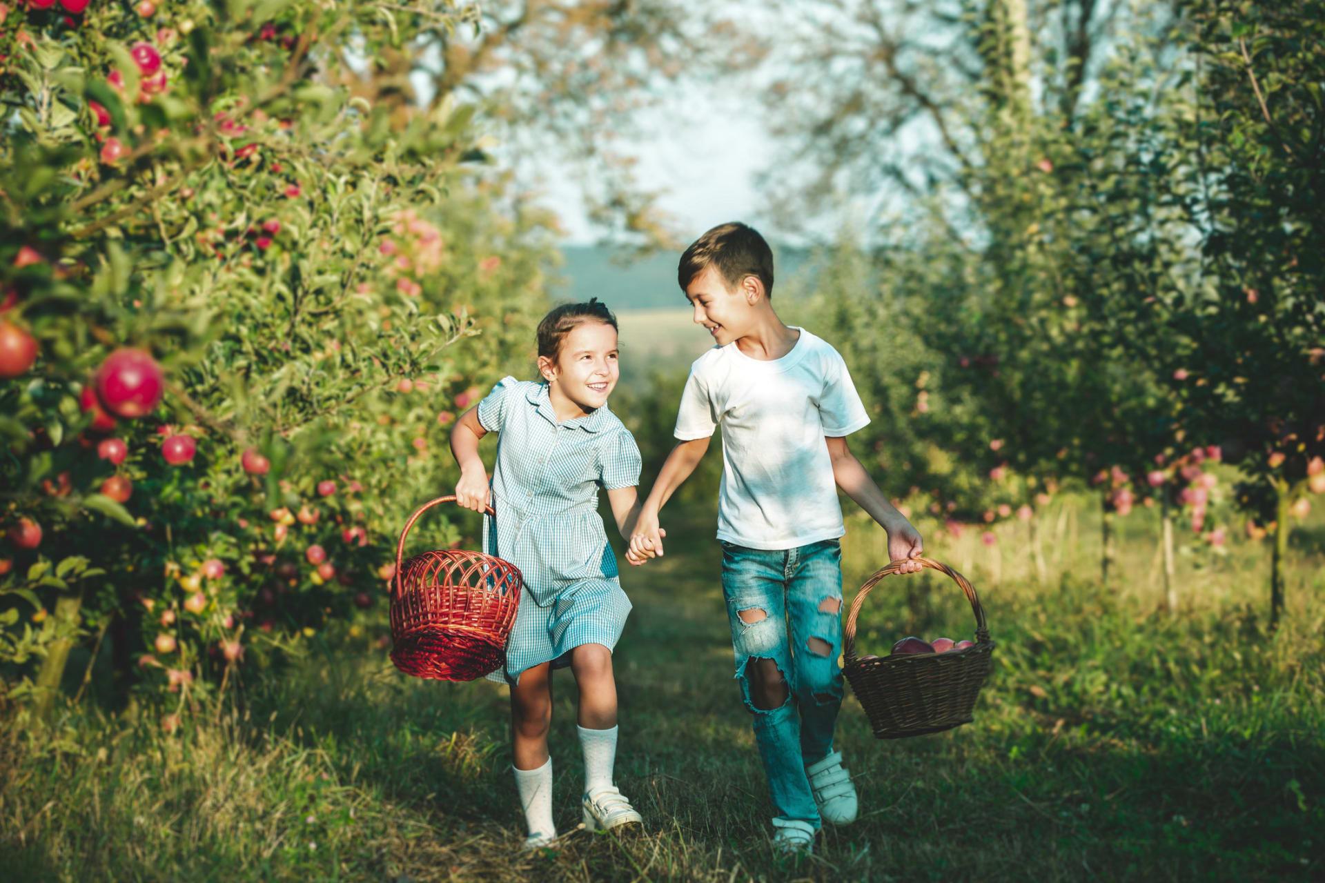 Visste du at du kan være med på innhøsting av epler på Abildsø Gård?