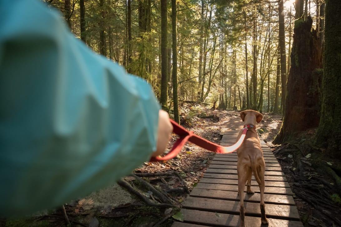 Kanskje din firbente venn finner en favorittsti i skogen?